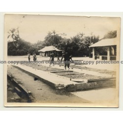 Congo-Belge: Indigenous Turn Over Drying Cocoa Beans / Cacao (Vintage Photo ~1930s)