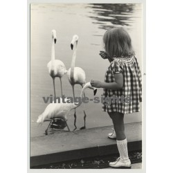 GIrl Feeds Flamingos (Vintage Photo 1970s)