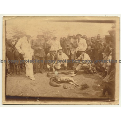 Congo: Colonizers & Indigenous Watching Snake Eating A Dog (Vintage Photo ~1910s/1920s)
