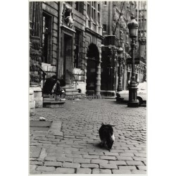Lydia Nash / Bruxelles: Street Scene - Kids- Cat (Vintage Photo 1980s/1990s)