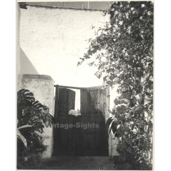 Lydia Nash / Bruxelles: Porta Con Gato (Vintage Photo B/W 1980s)