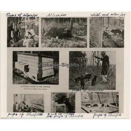 Alesund / Norway: Fur Farm - Blue Fox - Arctic Fox (Vintage Photo Collage ~ 1930s/1940s)