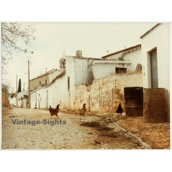 Lydia Nash / Bruxelles: Chickens On Run (Vintage Photo 1980s/1990s ~ DIN A4)
