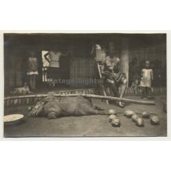 Congo: Tribe Chief & Impaled Wild Pig / Potamochoerus Porcus (Vintage Photo ~1940s/1950s)