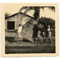 Congo-Belge: Native Men Move Large Wooden Box / Palm Tree...