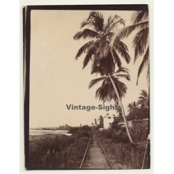 Congo-Belge: Railroad Track Near River Shore / Palm Tree...