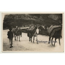 La Paz / Bolivia: Pack Donkeas On Mountain Pass (Vintage...