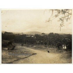 Boma / Congo-Belge: Outskirts - Forest (Vintage Photo 1930)