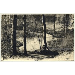 Forest Still Life - Lake - Trees (Vintage RPPC Belgium...