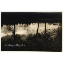 Forest Still Life - Tree Reflections On Lake (Vintage RPPC...