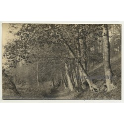 Forest Still Life *2 - Tree Avenue (Vintage RPPC Belgium...