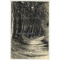 Forest Still Life *3 - Tree Avenue (Vintage RPPC Belgium...