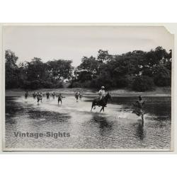 Dungu / Congo-Belge: Elephant Hunt - Horse - Indigenous...