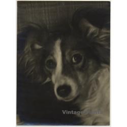 Portrait Of Sheltie - Mini Collie - Dog (Vintage Photo ~...