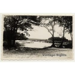 Congo Belge: River Shore - Trees - Landscape (Vintage Photo ~...
