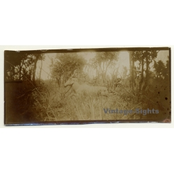 Congo Belge: Antelope Bubalis / Hartebeest / Kuh Antilope...