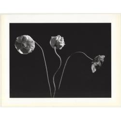 Horst P. Horst: Poppies 1989 (Sheet 1992: Form Horst 27 x 35.5...