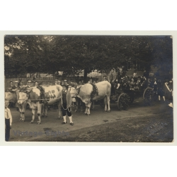 Blankenhain / Germany: Wedding Society In Cow Carriage / Cart...