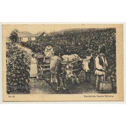 Romanian Farmers Grape Harvest (Vintage PC 1917)