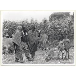 Tanzania: Maasai Men & Donkeys / Ethno (Vintage Photo ~1980s)