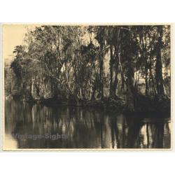 Florida / USA: River In Silver Springs / Tarzen (Vintage Photo...