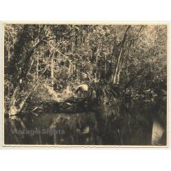 Florida / USA: Marigot Bay / Palm Trees (Vintage Photo 1940)