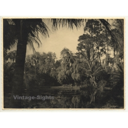 Florida / USA: Cypress Gardens / Trees - Water (Vintage Photo...