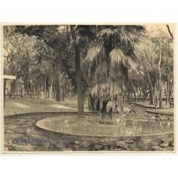 Florida / USA: Alligator Farm St. Augustine (Vintage Photo 1940)