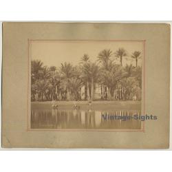 Pascal Sébah (1823-1886): Palmiers À Gizeh - Nile - Palms /...