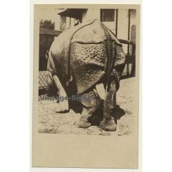 Carl Hagenbeck's Tierpark: Indian Rhinoceros / Panzernashorn...
