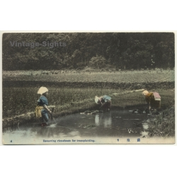Japan: Removing Rice-Shoots For Transplanting (Vintage Hand...