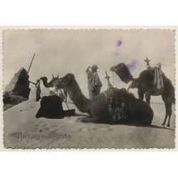 Sahara: Bedouins & Dromedaries On Dune (Vintage RPPC Ethnic)