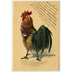 Rooster - Cock - Poultry / Paul Finkenrath (Vintage Hand...