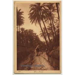 Lehnert & Landrock N° 141: Dans L'Oasis / Bedouins (Vintage PC...