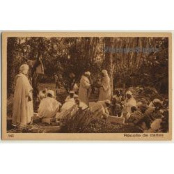 Lehnert & Landrock N° 145: Récolte De Dattes / Bedouins -...
