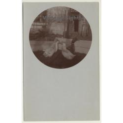 4 Geese On Meadow / Brent Goose (Vintage Cellofix RPPC ~1910s)