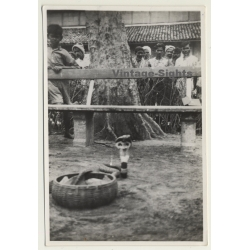 India: Snake Of Snake Charmer & Local People / Ethnic (Vintage...