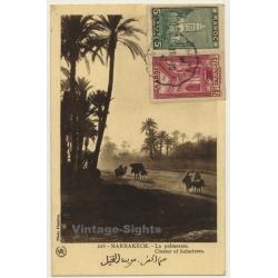 Marrakesh: La Palmeraie / Cluster Of Palmtrees - Camels...