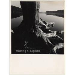 Ulf Sjöstedt (1935-2009):  Tree Study (Vintage Photo ~1980s)