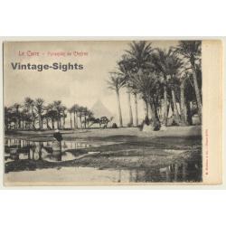 Cairo / Eygpt: Pyramide De Chefren / Camel (Vintage PC ~1900s)
