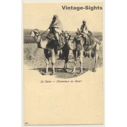 Cairo / Egypt: Chameaux Au Desert / Camel (Vintage PC ~1900s)
