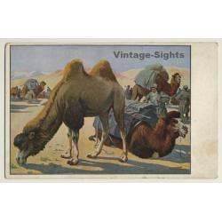 Meinholds Tierbilder: Desert - Camels - Caravan (Vintage...