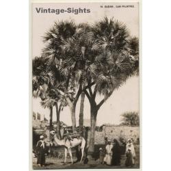Sudan: Dum Palmtree / Camel - Bedouins - Ethnic (Vintage RPPC...