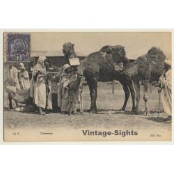 Maghreb: Chameaux / Camels - Berber - Ethnic (Vintage PC ND 1906)