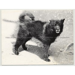 Portrait Of Scruffy Street Dog / Paris - France (Vintage Photo 1970s B/W)