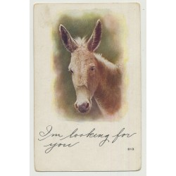 Portrait Of Donkey's Head / I'm Looking For You (Vintage Photo PC)