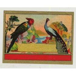 Parrot & Peacock (Vintage Chromo Litho Label ~1910/1920s)