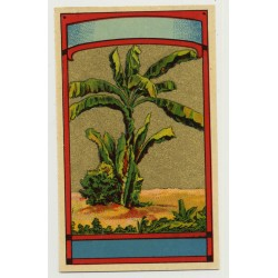 Palm Tree (Vintage Chromo Litho Label ~1910/1920s)