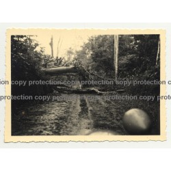 View Out Of Oldtimer On To Jungle Road & Fallen Tree  - Congo? (Vintage Photo B/W 30s/40s)