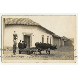 La Paz / Bolivia: Farmers, Oxes & Bullock Cart (Vintage Real Photo PC 1930s/1940s)